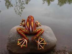 海乐园毛绒玩具红色飞蛙