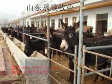 山東永順牧業供應肉驢優良種苗