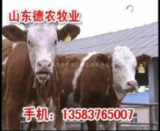 菏澤肉牛養殖場杭州肉牛養殖場陳巴爾虎旗肉牛養殖場