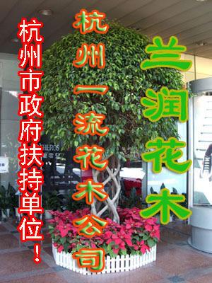 杭州市及周边租售观赏 植物养护