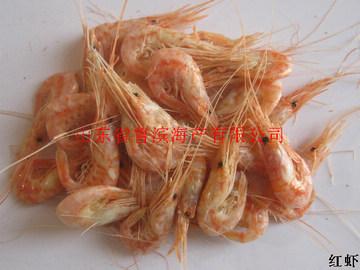 供应红虾 鹰爪虾 琵琶虾 皮皮虾 虾耙子 螃蟹