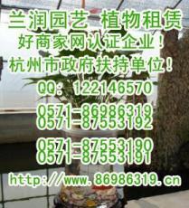 杭州植物租賃公司788906