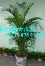 QQ杭州錢江新城花卉租擺3植物租賃3植物3植物擺放公司