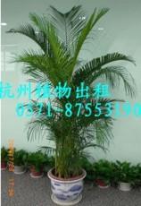 QQ花卉租賃4杭州花卉租賃5花卉租賃公司5辦公室花卉租賃