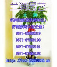 杭州商务楼办公楼绿植空气净化植物租赁花草租摆