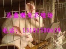 2010年獺兔養殖前景 獺兔養殖網 獺兔飼料價格