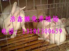 獺兔養殖技術 鐵兔籠 水泥兔籠