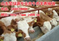 各地肉牛行情全国各地肉牛价格咨询表