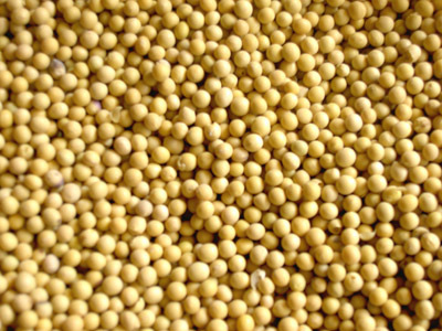 武泰求购黄豆高粱大麦
